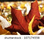 A red autumn leaf, close-up, Sweden. - stock photo