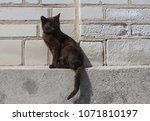 Black Cat Sitsting At The Wall