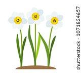 spring narcissus flowers... | Shutterstock .eps vector #1071824657