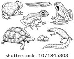 reptiles and amphibians set.... | Shutterstock .eps vector #1071845303