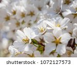 close up macro detail of... | Shutterstock . vector #1072127573