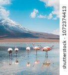 Small photo of View of pink flamingo lake on the border between Bolivia and Chile