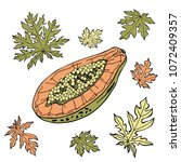 papaya sketch and leaves set....   Shutterstock .eps vector #1072409357