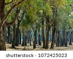 mahogany forest   national park ...   Shutterstock . vector #1072425023