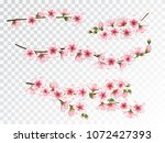 japanese cherry branches... | Shutterstock .eps vector #1072427393
