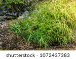 reed next to a valley stream | Shutterstock . vector #1072437383