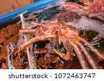 fresh japanese hair crab  king... | Shutterstock . vector #1072463747