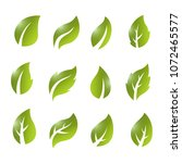 artistic collection of green...   Shutterstock .eps vector #1072465577