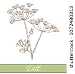 dill in hand drawn style....   Shutterstock .eps vector #1072480313