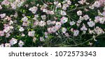 pink and white springtime... | Shutterstock . vector #1072573343