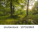 Forest in ��holmen, v�¤stmanland, Sweden, habitat for many rare insect, sun shines through the leaves - stock photo