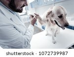 doctors checkup. pleasant nice... | Shutterstock . vector #1072739987