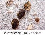 nourishing chinese herbal...   Shutterstock . vector #1072777007
