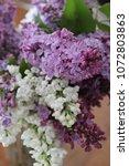fresh cut pink  purple and...   Shutterstock . vector #1072803863