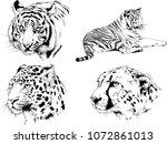vector drawings sketches... | Shutterstock .eps vector #1072861013