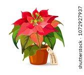 euphorbia pulcherrima plant in... | Shutterstock .eps vector #1072927937