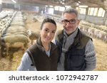 couple of breeders in sheep shed | Shutterstock . vector #1072942787
