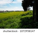view of the nature  in the... | Shutterstock . vector #1072958147