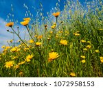 view of the nature  in the... | Shutterstock . vector #1072958153
