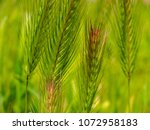 view of the nature  in the... | Shutterstock . vector #1072958183