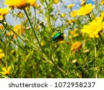 view of the nature  in the... | Shutterstock . vector #1072958237