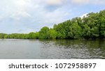 mangrove forest along the river ... | Shutterstock . vector #1072958897