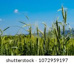 view of the nature  in the... | Shutterstock . vector #1072959197