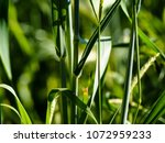 view of the nature  in the... | Shutterstock . vector #1072959233