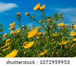 view of the nature  in the... | Shutterstock . vector #1072959953