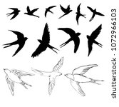 swallow sketch and silhouette ... | Shutterstock .eps vector #1072966103