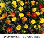 beautiful tulips garden | Shutterstock . vector #1072984583