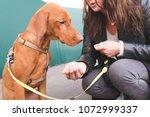 the female owner feeds the dog... | Shutterstock . vector #1072999337