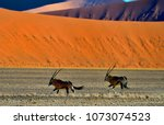 oryx in the desert  namib ... | Shutterstock . vector #1073074523
