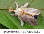 macro image of a beautiful moth ...   Shutterstock . vector #1073074667