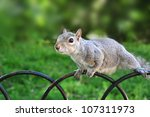 squirrel in the park | Shutterstock . vector #107311973