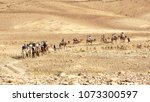 Small photo of tourists riding camels in the negev desert near Arad in Israel