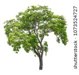 tree real isolate die cut on... | Shutterstock . vector #1073524727