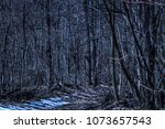 The path turns into the wilderness of the mysterious night forest exciting wildlife is pure and no one around