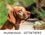 dog with collar. collars... | Shutterstock . vector #1073674043