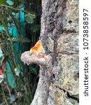 Fungus And Bark  Monteverde...