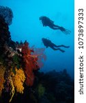 Small photo of Two divers floating above coral reef with soft coral sea fans highlighted, Fiji.