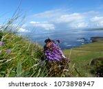two zygaena filipendulae six...   Shutterstock . vector #1073898947