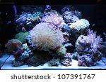Coral Tank