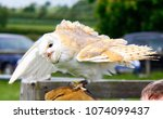 barn owl on glove of trainer | Shutterstock . vector #1074099437