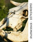 animal skull with open mouth ... | Shutterstock . vector #1074140393
