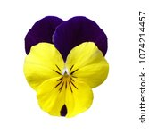Purple Yellow Pansy Flower On...
