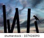 The Calm Bird