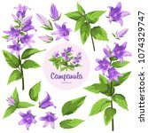 campanula   flowers  isolated... | Shutterstock .eps vector #1074329747