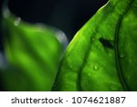 blurred beautiful green leaf...   Shutterstock . vector #1074621887
