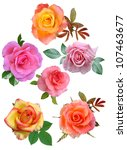 Stock photo roses flowers it is isolated a holiday 107463677